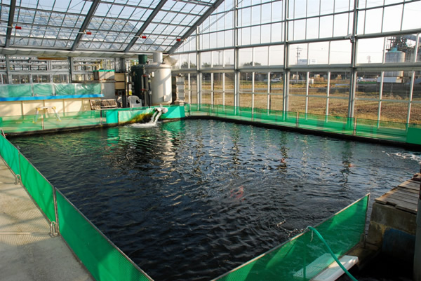 Breeder detail for Fish pond preparation